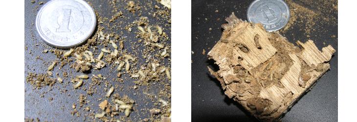 白蟻(シロアリ)の予防と駆除