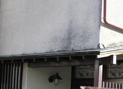 外壁塗装にカビ発生や変色しているとき