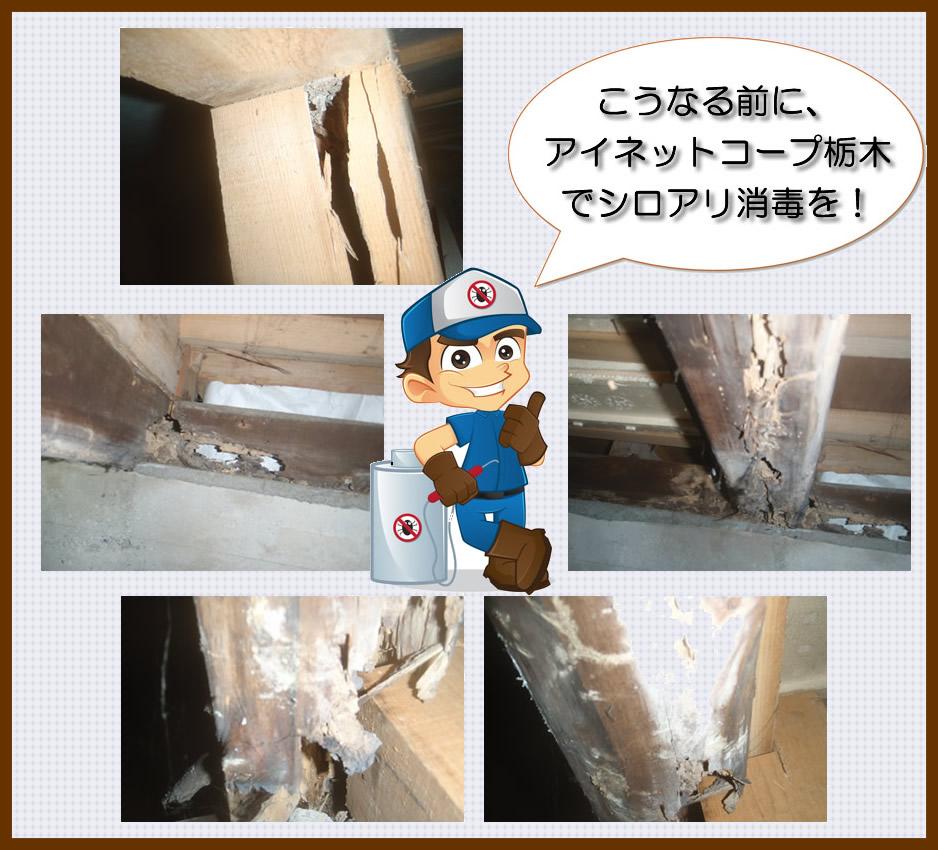 白蟻の被害